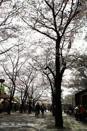 20110410_11.jpg