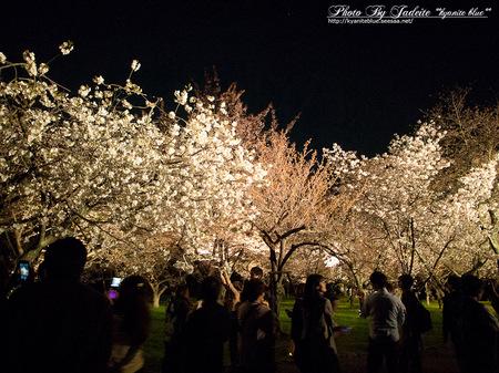 sakura2012_01.jpg