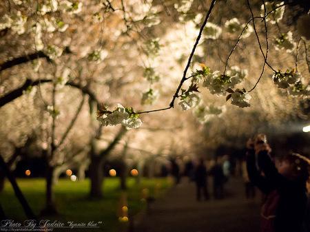 sakura2012_09.jpg